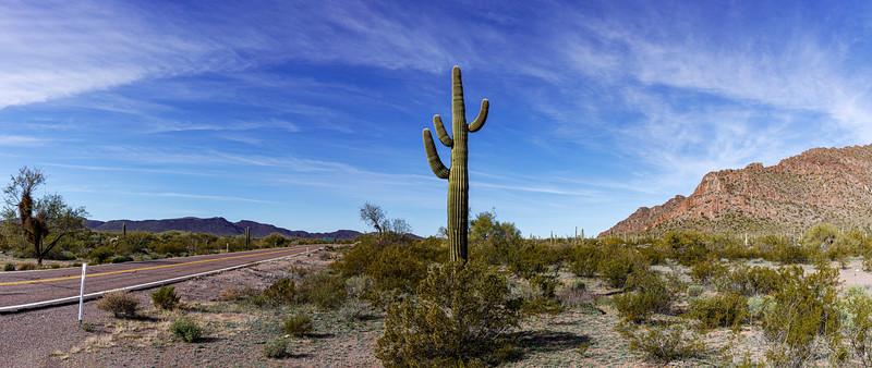 Cactus Directs Traffic