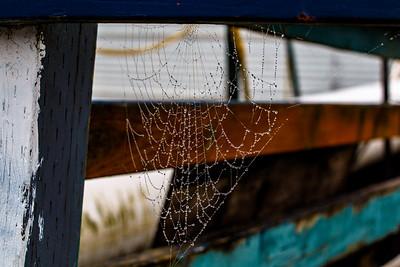 Dew The Web