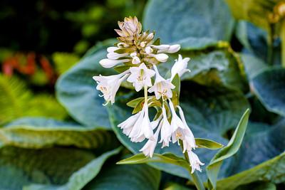 Kubota Garden Flowers