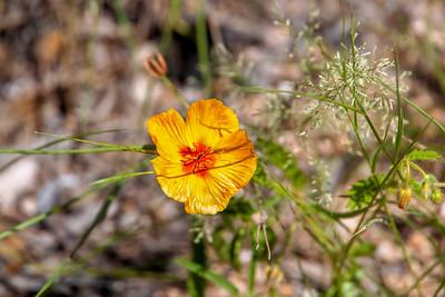 Summer Wildflower