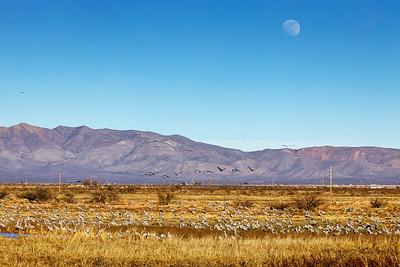 Moon Over Cranes