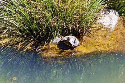 Turtle-Tude