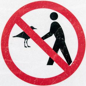 Don't Be a Bird Brain