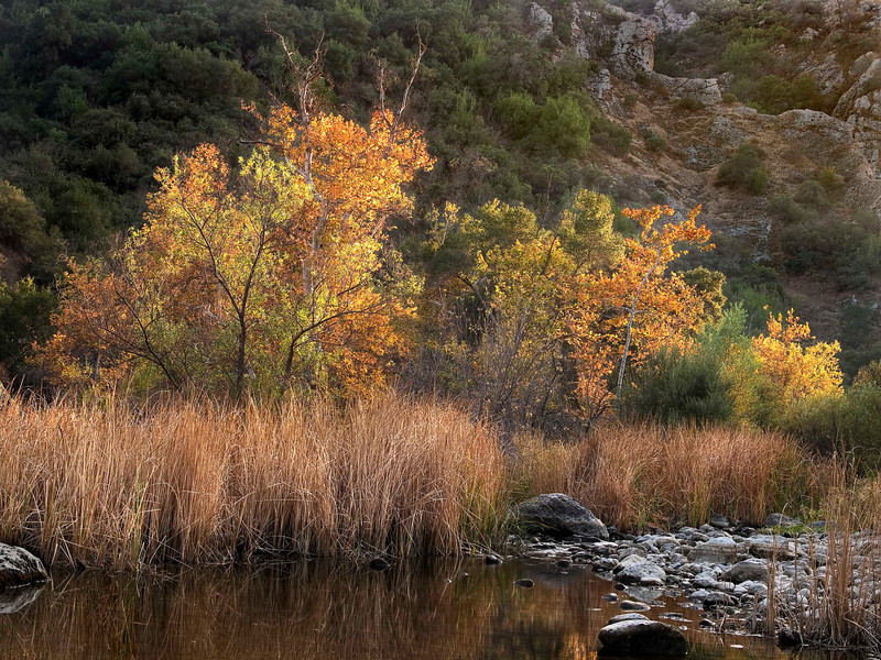 Fall Color at Malibu Creek State Park.  Fall Color is hard to come by in So. Cal.