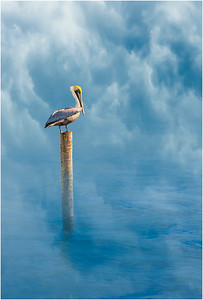 Pelican on a Pole 2b