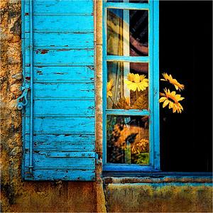 Sunflower Window, L'Isle sur la Sorgue, France A