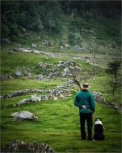 Sheep Herding (1)