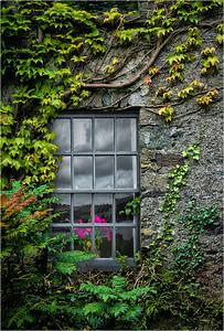Ivy Walls, Killarney