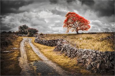 Burren Path A