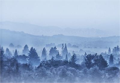 Blue Dawn, Sonoma