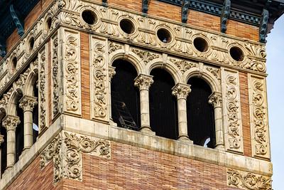 Pigeon In the Belfry
