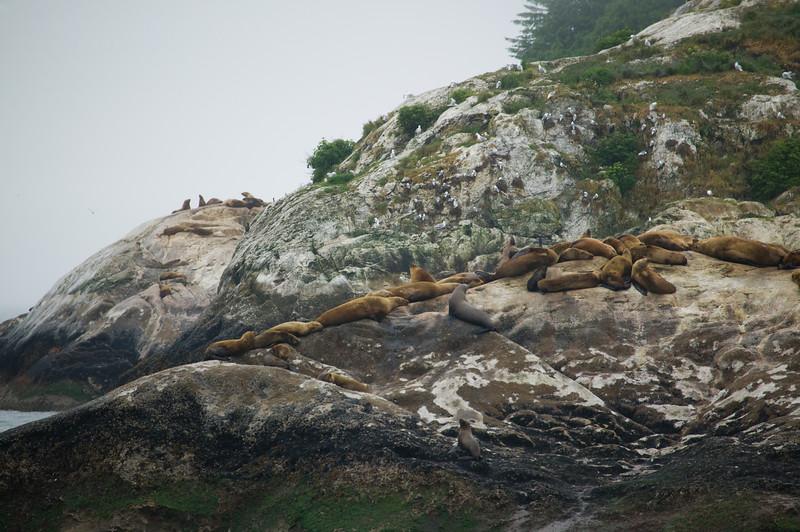 Glacier Bay rookery 1