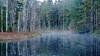 Estuary - Great Bear Rain Forest