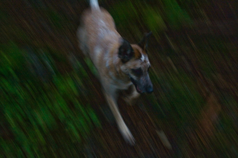 Yellow Dog runs downhill