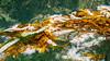 Nudibranch -  Great Bear Rain Forest