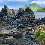 Pipit(?) on rocks at Summer bay
