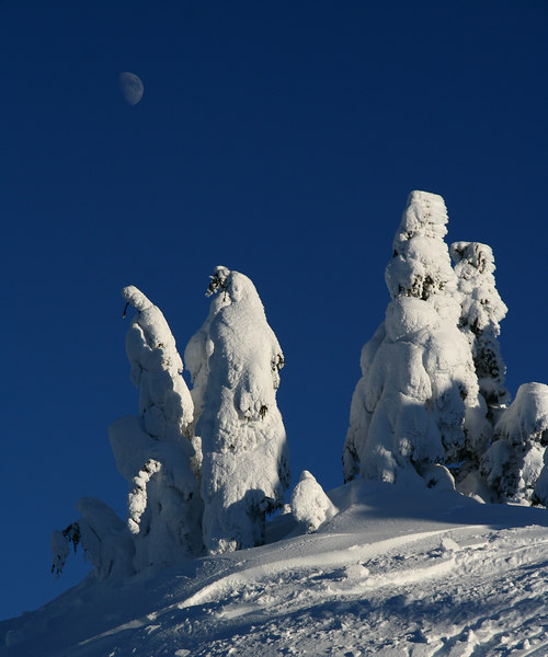 moon over Eagle Crest trees