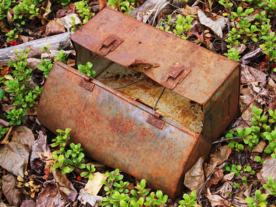 rusty lunchbox and soap berries