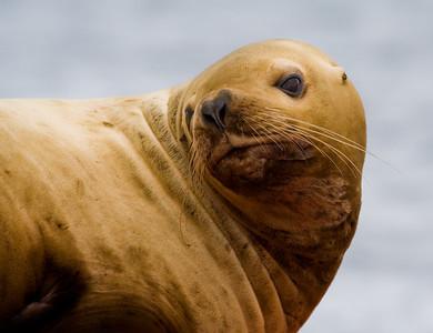 sea lion buoy 2