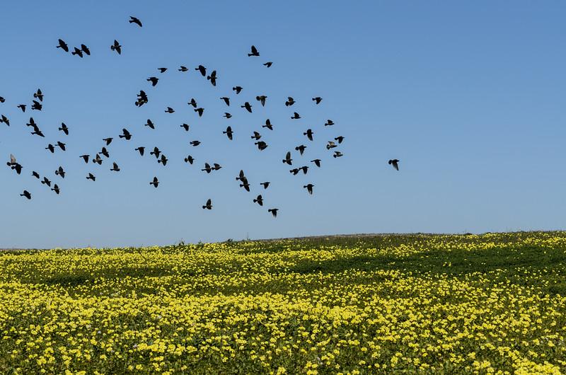 Field Flock