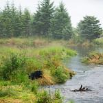 Mendenhall bear 3