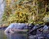 Tree Rock -  Great Bear Rain Forest