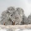 Snow Bound