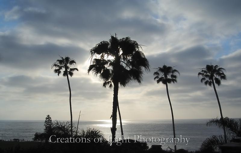 La Jolla Palms