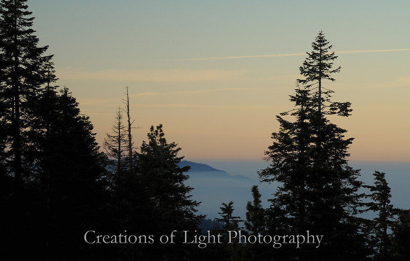 Dawn at Sequoia