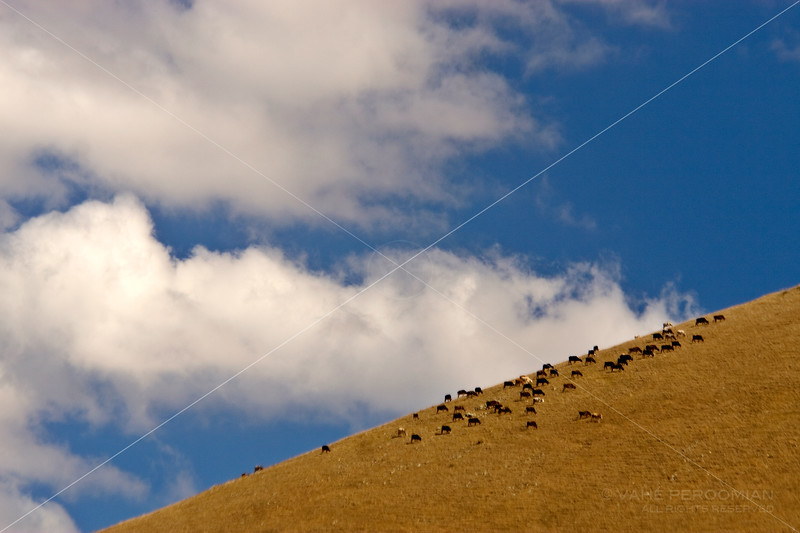 Grazing on a Slope
