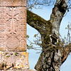 Khatchkar and Tree