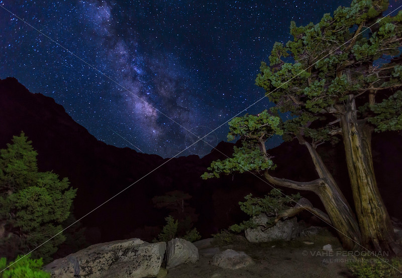 Junipers and the Milky Way