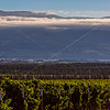 Vineyards to the Mountains
