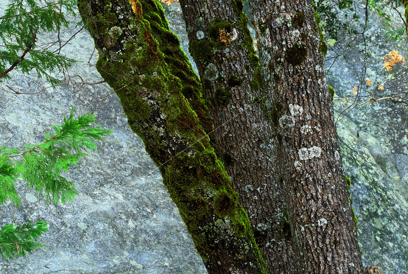 Still Life with Trees, Moss, and Granite
