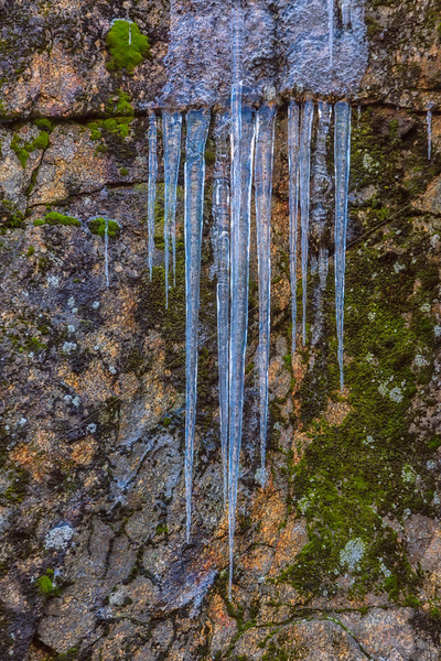 Moss and Icicles, Frozen Cliff