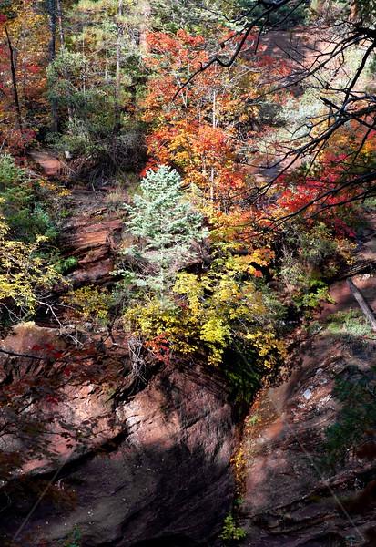 A Moment in Oak Creek Canyon