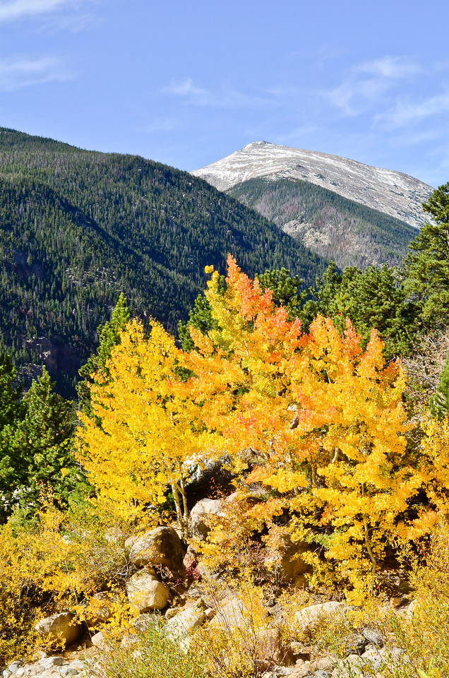 Fall color  <br /> Rocky Mountain Nat'l. Park