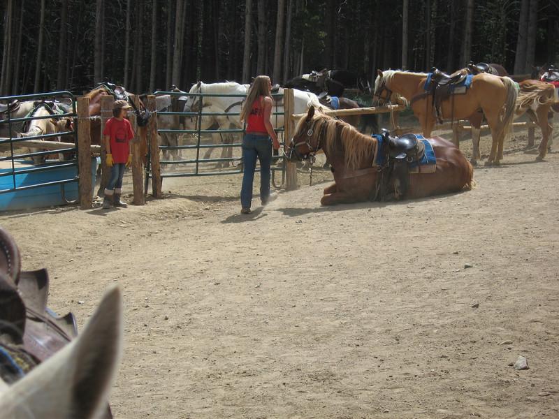 Wrangler bringing up a horse