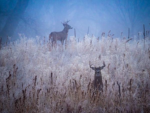 Misty Buck
