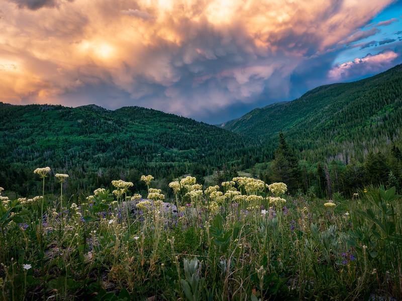Wildflower Storm
