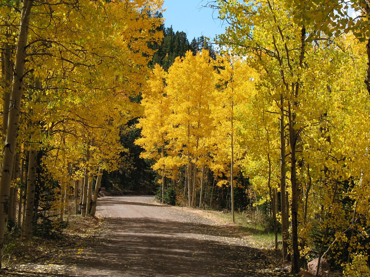 Fall on Gold Camp Road