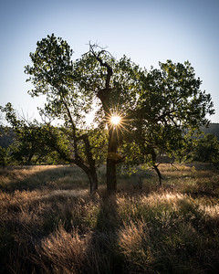 Sunrise, Picket Wire Canyon, Comanche Nat'l Grassland, CO.  Nearly stepped on a rattlesnake after this shot!