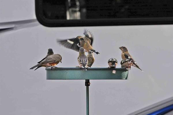 Hanging at the Birdbath