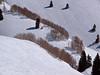 Aspen in Sundown Bowl.<br /> March 1, 2011<br /> Vail, Colorado