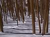 Aspens<br /> March 1, 2011<br /> Vail, Colorado