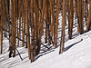 Aspen<br /> March 1, 2011<br /> Vail, Colorado