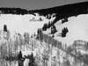 Aspen in Sundown Bowl.<br /> Black and White<br /> March 1, 2011<br /> Vail, Colorado