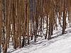 March 1, 2011<br /> Vail, Colorado