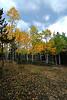 2007 Colorado Fall color.