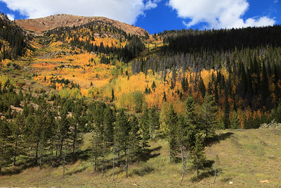 Colorado Breck  fall gold 2016